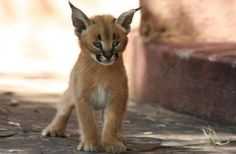 The 10 Cutest Baby Animals of the Desert
