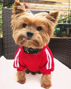 Here are eight ways my small dog acts like the biggest dog in the world.
