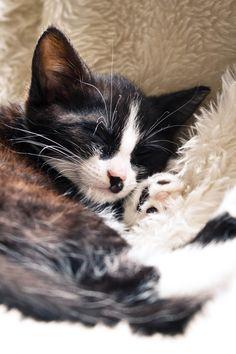 cat (Younes Eibel)