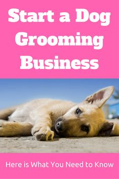 If you are wondering how to start a dog grooming business, then this article will walk you through what you should think about.