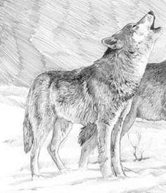wolves by MC-kenzie.deviantart.com