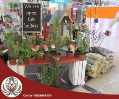Bofberg Flowers are open for business in the Garden Route Mall and in Pretoria at the Grove Mall and Woodlands Boulevard Mall today. Start your reconciliation with a bunch of Fynbos from Bofberg Flowers. Grove Mall, Pretoria, Timeline Photos, Holidays, Table Decorations, Lifestyle, Business, Garden, Flowers
