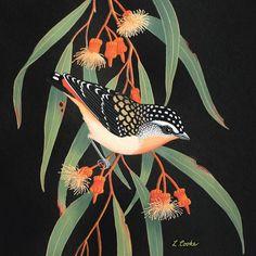 'Australian Spotted Pardalote On Eucalyptus Blossom' by Lyn Cooke - Birds Bird Illustration, Botanical Illustration, Illustrations, Australian Native Flowers, Australian Animals, Watercolor Bird, Wildlife Art, Botanical Art, Bird Art
