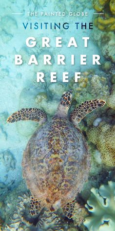 Visiting the Great Barrier Reef: in Photos - The Painted Globe Underwater photography from Green Island, near Cairns, and the Great Barrier Reef itself! Including a sea turtle, clown fish and a host of colourful coral.