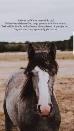 King Horse, Islamic Wallpaper, Islamic Quotes, Horses, Animals, Reading, Quote, Animales, Animaux