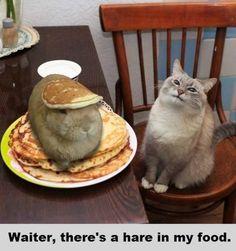 Waiter??