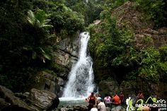 El Yunque National Forest Wildlife   Things To Do in El Yunque National Forest2 Backpackers Travel ...
