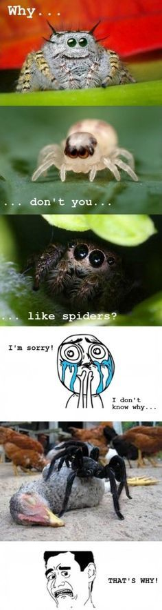 LOL! Personally I like (most) spiders<<<<< I really don't mind spiders I think they're pretty cool