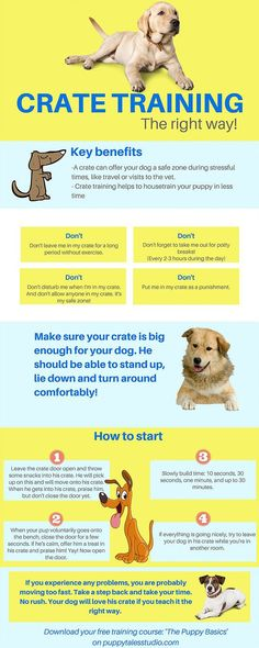 Dog Training Crate training, the right way! Teach your dog to be in his… - Puppies! - Dog Training Crate training, the right way! Teach your dog to be in his… - Puppy Training Tips, Crate Training, Training Your Dog, Agility Training, Potty Training, Training Classes, Training Collar, Training Academy, Training Videos