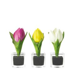 Vases with tulips Nido