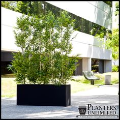 **Outdoor Plants, Trees, Bamboo   Use this website for patio plants