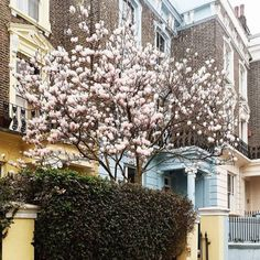 Primrose hill - Londres