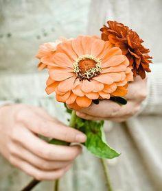 Flowers for you Autumn Tea, Autumn Garden, Flowers For You, Flowers Pics, Felt Flowers, Pretty Flowers, Just Peachy, Zinnias, Chrysanthemums