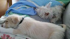 Sadepäivän pisaroita Dogs, Animals, Animales, Animaux, Animal Memes, Animal, Pet Dogs, Dog, Animais