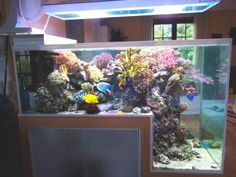 Ver peixe para lá e para cá pode ser bem chato se você não tiver um aquário que atraia as atenções. Veja estes exemplos e entenda o que isso significa.