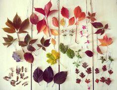 Les jolies feuilles d'automne