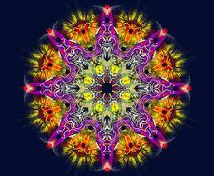soleil intérieur ! interior sun ! sol interior ! Mandala de Pierre Vermersch Digital Drawings
