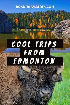 While Edmonton is a fun city where you can spend a whole life without getting bored, there are also plenty of cool activities nearby that you definitely shouldn't miss. Check out our top recommendations! Visit Canada, Is 11, Day Trips, Good Day, Something To Do, Getting Bored, Activities, City, Unique
