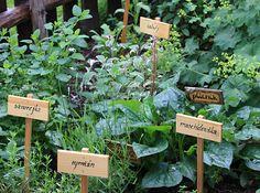 bylinkova-zahradka-32503222 Wood Engraving, Herb Garden, Garden Design, Herbs, Gardening, Fruit, Plants, Outdoor, Garden Ideas