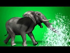 2015 06 29 Green Screen 3 for Free Best Green Screen, Free Green Screen, Green Background Video, New Background Images, Download Wallpapers For Pc, Tiger Illustration, Elephant Walk, Channel, New Backgrounds