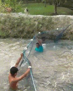 魚「うっわ、網張られとるやんけ!」
