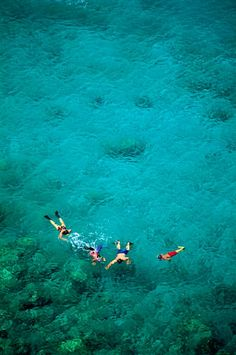 Aerial view of snorkellers swimming around Honolua Bay, a state marine conversation district in Maui,Hawaii