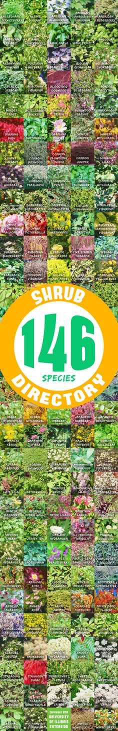 Shrub Directory (146 Species): Search by size, tolerance, exposure, or use!