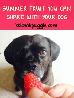 Summer fruits for dog