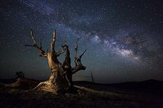 The Winning The Milky Way and a dead bristlecone pine tree high atop a dolomite ridge in the White Mountains, California Poster Print (34 x 22) -- Awesome products selected by Anna Churchill