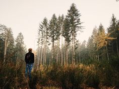 Trees make us calmer. Read study #tree #forrest #earth