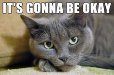 Funny cats (10 photos)