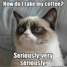 Grumpy Cat Breed, Grumpy Cat Quotes, Funny Grumpy Cat Memes, Funny Memes, Funniest Memes, Angry Cat Memes, Sarcastic Memes, Funny Minion, Funny Cartoons
