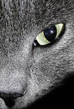 Beautiful Cat Eye Close up #PleaseComeCloser