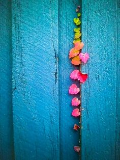 (Photography by John P Fisk) gorgeous colored leaves growing along a turquoise blue painted building Color Splash, Color Pop, Orquideas Cymbidium, Foto Poster, Jolie Photo, My Favorite Color, Rainbow Colors, Rainbow Things, Shades Of Blue