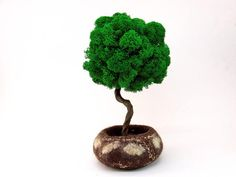 Many people don't know that bonsai trees die for very simple reasons, such as over-watering or under-watering. Bonsai Making, Topiary Plants, Indoor Bonsai, Wire Trees, Miniature Trees, Office Plants, Greenhouse Gardening, Artificial Plants, Green Colors