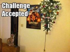 Dump A Day Beware Of Animals With Funny Captions - 40 Pics