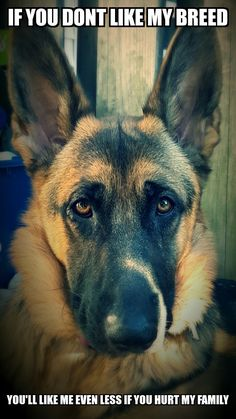 The German Shepherd. That's Right! Don't even think about it!