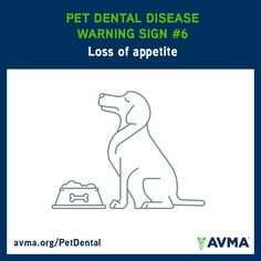 Has your dog lost his or her appetite? Talk to your veterinarian. It could be a sign of dental disease. For more information about pet dental health and the importance of preventive care, visit avma.org/PetDental