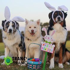 How to Host a Doggie Easter Egg Hunt – The Dog Bakery Dog Commands Training, Basic Dog Training, Dog Easter Eggs, Dog Grooming Clippers, Easiest Dogs To Train, Egg Hunt, Dog Care, Dog Friends, Happy Easter