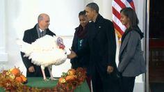 10 fun facts about America's Thanksgiving turkey pardon   CBC News