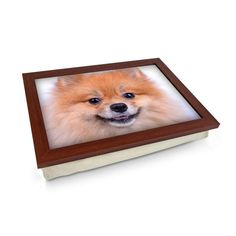Pomeranian Dog Close Up Lap Tray Personalised Gifts Unique, Unique Gifts, Lap Tray, Breakfast In Bed, Pomeranian, Cleaning Wipes, Dogs And Puppies, Corgi, Drawings