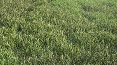 Free Grass by Mischa Winkler - 3D Architectural Visualization & Rendering Blog