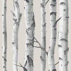 Brewster Birch Tree Peel and Stick Wallpaper Birch Tree Wall Pops Wallpaper