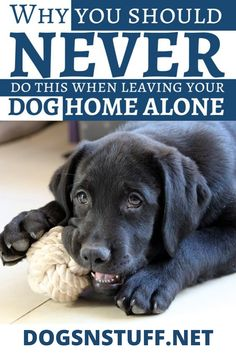 These are the habits that you are guilty of when you're leaving your dog at home all alone! I Love Dogs, Cute Dogs, Dog Anxiety, Dog Rules, Dog Hacks, Dog Eating, Dog Behavior, Training Your Dog, Dog Owners