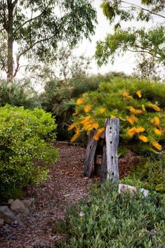 inspiring native garden rings bells for Linda Ross and to the sound of birdsong she changes her tune about the best plants to create pretty gardens. Australian Garden Design, Australian Native Garden, Australian Native Flowers, Australian Plants, Australian Wildflowers, Hells Kitchen, Bush Garden, Hillside Garden, Garden Paths