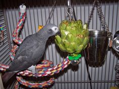 An artichoke with other foods inserted in the leaves makes a foraging toy.