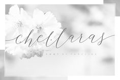 Chellaras Script by FadeLine on @creativemarket