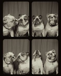 Put two dogs in a photo booth and magic happens. At least is does for Lynn Terry, a Missouri-based photographer whose images of dogs...