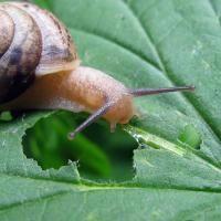 Les limaces et les escargots vous envahissent et colonisent vos plantes ? Nous avons un anti-limace naturel, écologique et... ... gratuit. Découvrez l'astuce ici : http://www.comment-economiser.fr/anti-limace-anti-escargot-naturel-ecologique-truc.html