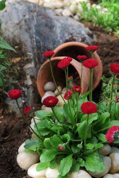 Inspirasjon – Min Oase Succulents, Planters, Gardening, Lawn And Garden, Funny Stuff, Succulent Plants, Plant, Window Boxes, Pot Holders